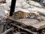 Le Safari Park de Canton