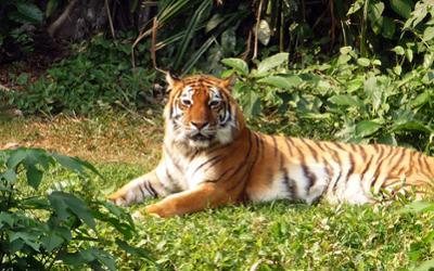 Zoo Guangzhou