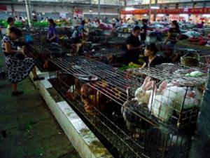 Abattoir Marché Yangshuo