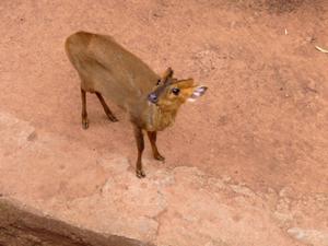 Bambi Zoo de Guangzhou