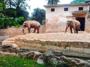 Eléphants Zoo de Guangzhou