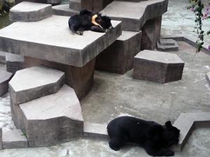 Ours Zoo de Guangzhou