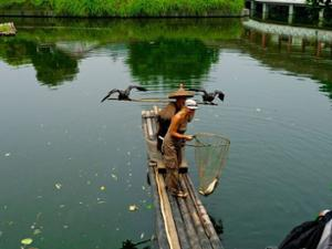 Pêche cormoran Yangshuo