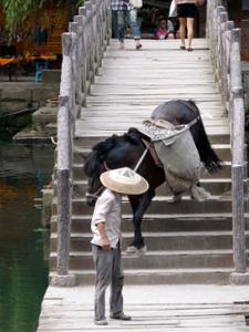 Cheval Fenghuang