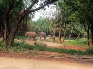 Eléphants Safari Park Guangzhou