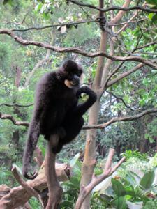 Primate Safari Park Guangzhou