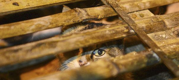 1000 chats abandonnés en Chine