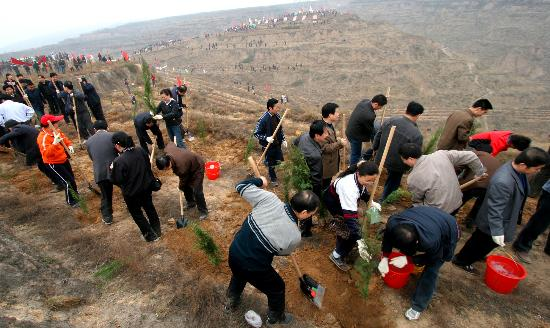 Reforestation en Chine