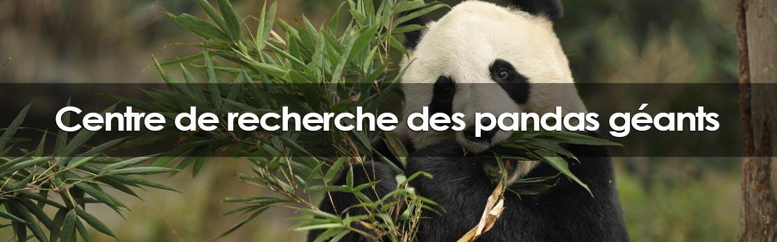 Centre de recherche des pandas géants de Chengdu