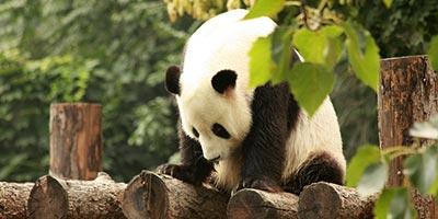 Zoo de Pékin