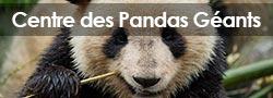 Centre des pandas géants