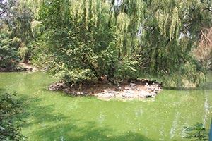 Zoo de Beijing