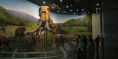 Musée de la Mongolie Intérieure
