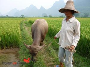 Paysan Yangshuo